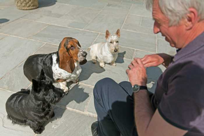 Homesitter Peter Jones with 3 dogs