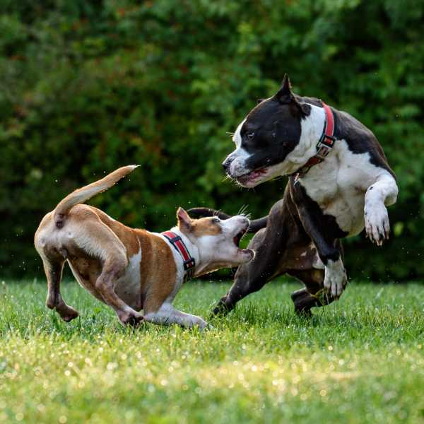 Dog Time - Dog Aggression Toward Other Dogs: Warning Signs, Treatment, & Prevention