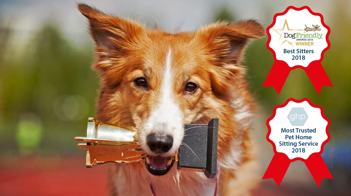 Homesitters Awards 2018 collie dog with a trophey in its mouth