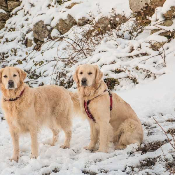 5 tips for walking your dog during the winter