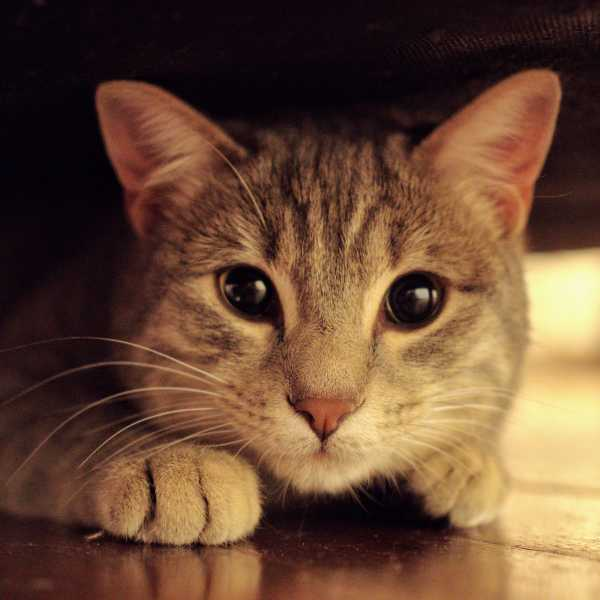 Katzenworld - Tips for Introducing a new Kitten or Cat to Your Home