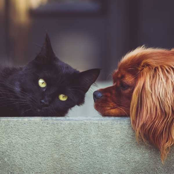 Cats vs Dogs - Who wins in your area?