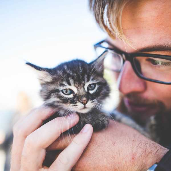Why men are driving the rise in cat ownership in the UK