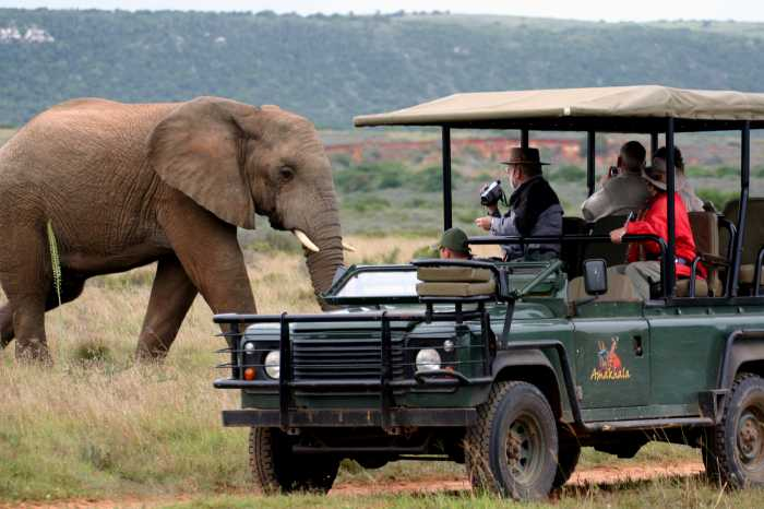 Book Homesitters While You're On A Safari Holiday