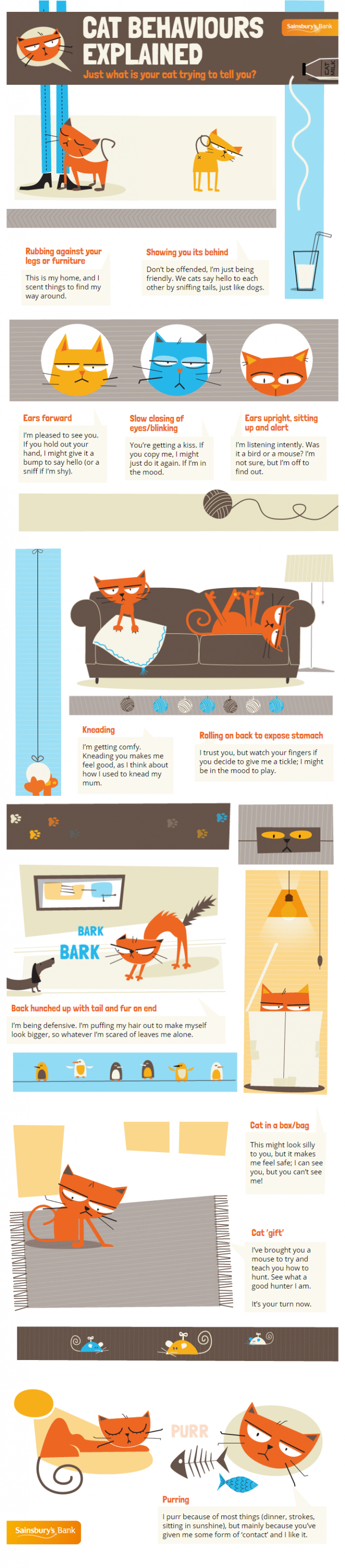 Sainsbury Bank Money Matter Blog Your Cat Behaviour