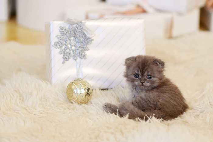 Kitten and Christmas present