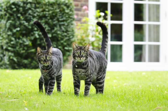 Mr & Mrs Ghosh beautiful cats