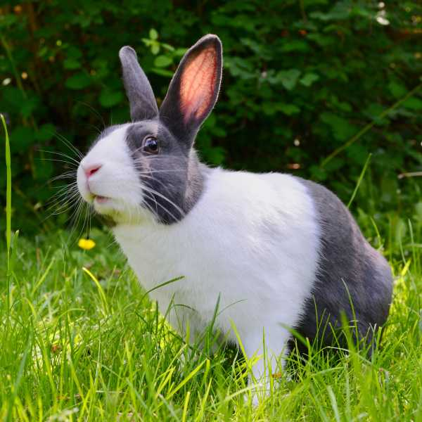 Rabbit Welfare Association & Fund - Bunny MOT