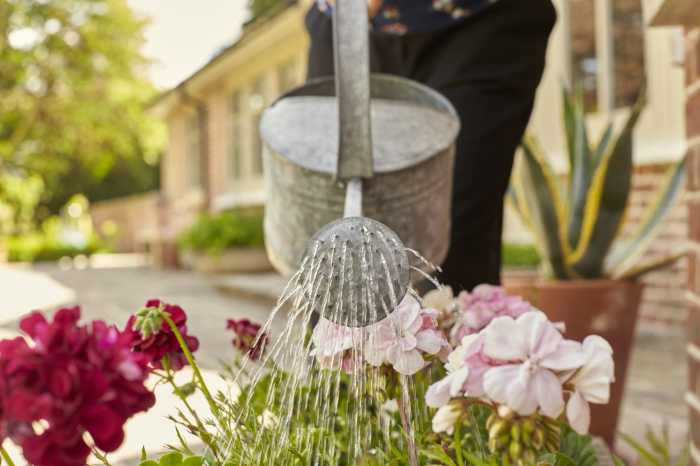 Homesitters for watering and caring for gardens