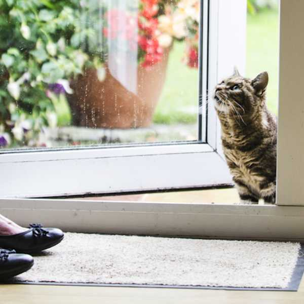 Katzenworld – Preventing Cats Overheating in the Heatwave
