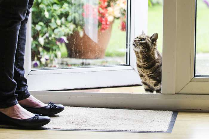 Cat sitting service in london