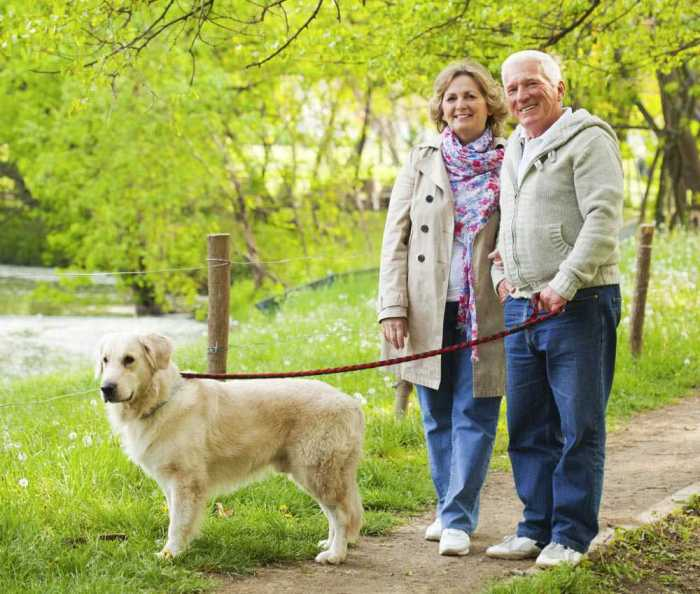 Dog walking as part of a pet sitting service