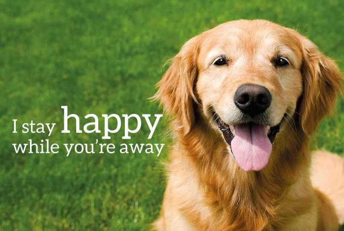 "Happy dog, with the words ""I stay happy while you're away"""
